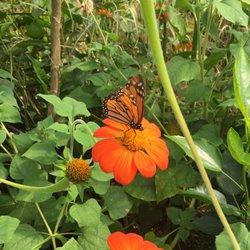 Photo Of Marku0027s Lawn U0026 Garden   Bridgton, ME, United States. Butterflies At