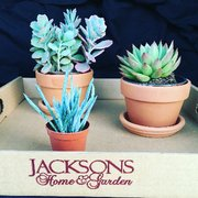 Charmant Patio Fountain Photo Of Jacksonu0027s Home U0026 Garden   Dallas, TX, United  States. Succulents!