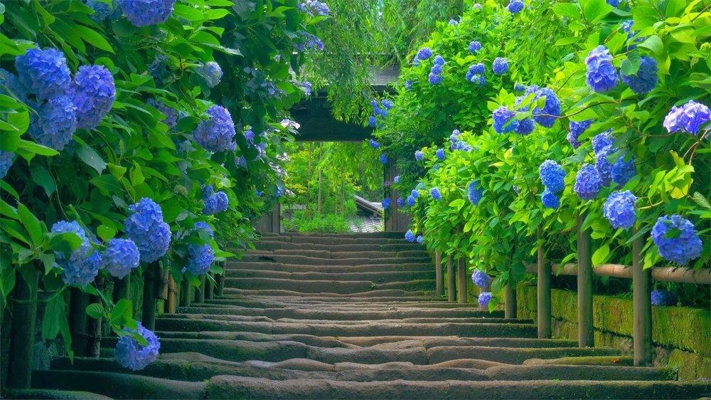 My garden concepts: Herndon, VA