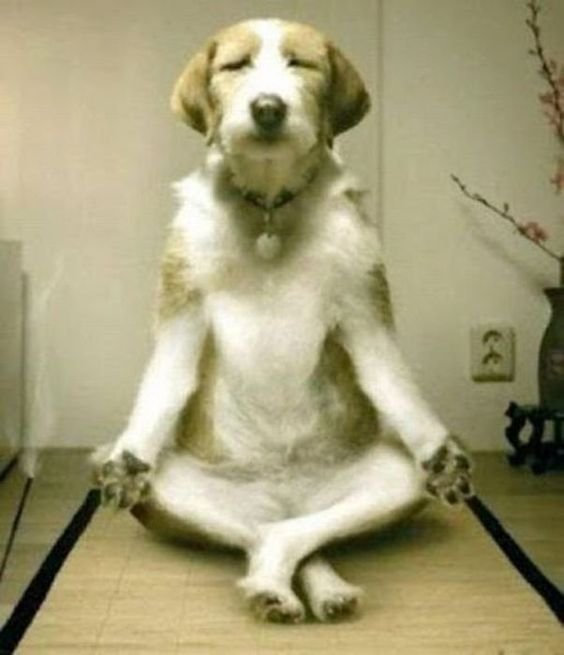 Namaste Dog Walking Company