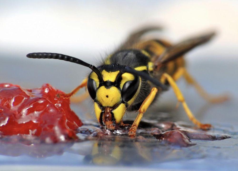 Gulf Coast Pest Control: Mobile, AL