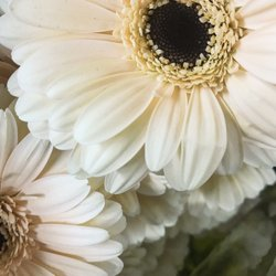 Photo of Dreisbach Wholesale Florist - Louisville, KY, United States
