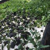 Photo Of Calgo Gardens   Howell, NJ, United States. Aqua Farm