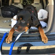 Rotten Rottie Rescue 52 Photos 10 Reviews Animal Shelters