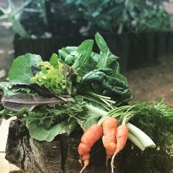 The Natural Gardener - 152 Photos & 185 Reviews - Nurseries ...