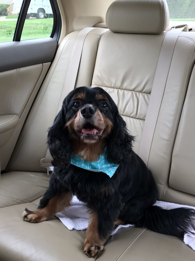 Dog Gone Cute Grooming: 3847 Hwy 53, Hoschton, GA
