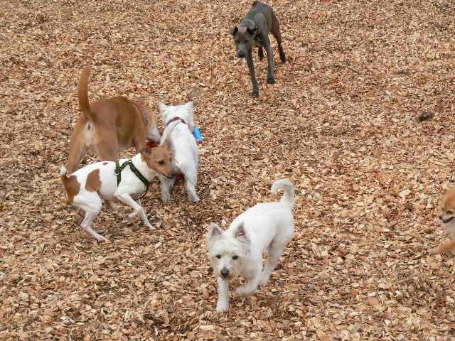 Lucky Dog Resort: 19517 113th St SE, Snohomish, WA