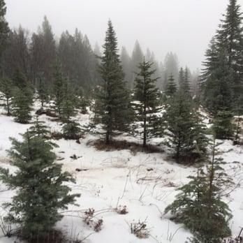 Snowy Peaks Tree Farm - 17 Photos & 15 Reviews - Farms - 30100 ...