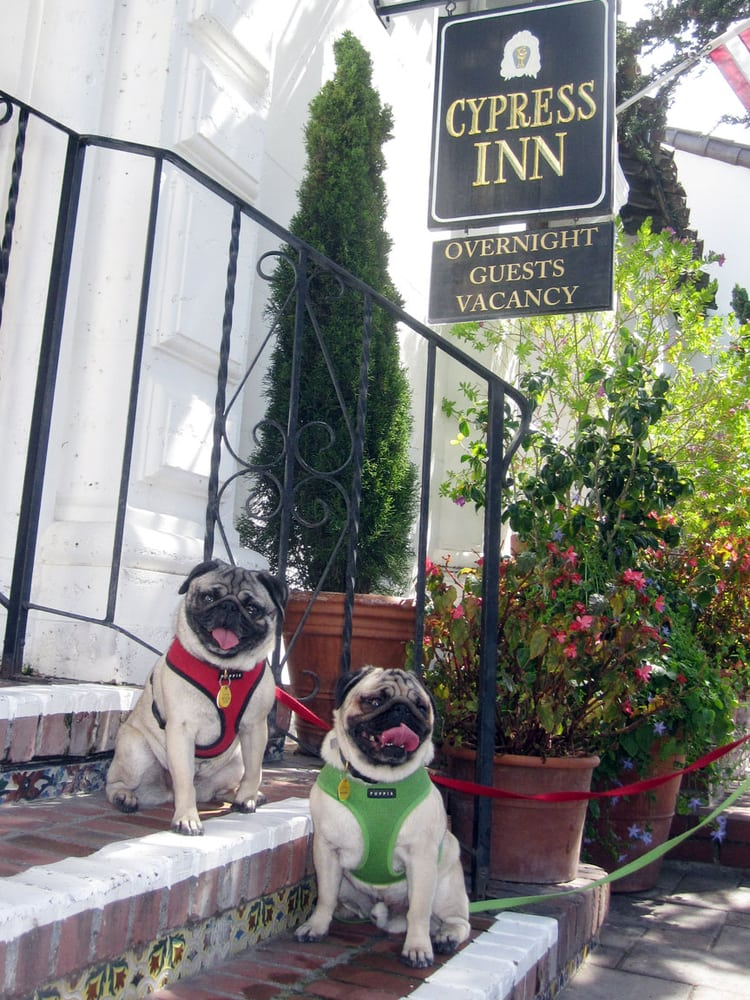 cypress inn chat rooms The cypress inn welcomes one pet of any size for an additional fee of $30 per  night, $50 per night for two pets, and $70 per night for three pets all rooms are  pet.