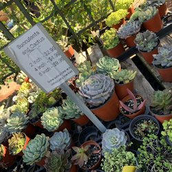 Photo Of Hashimoto Nursery Los Angeles Ca United States