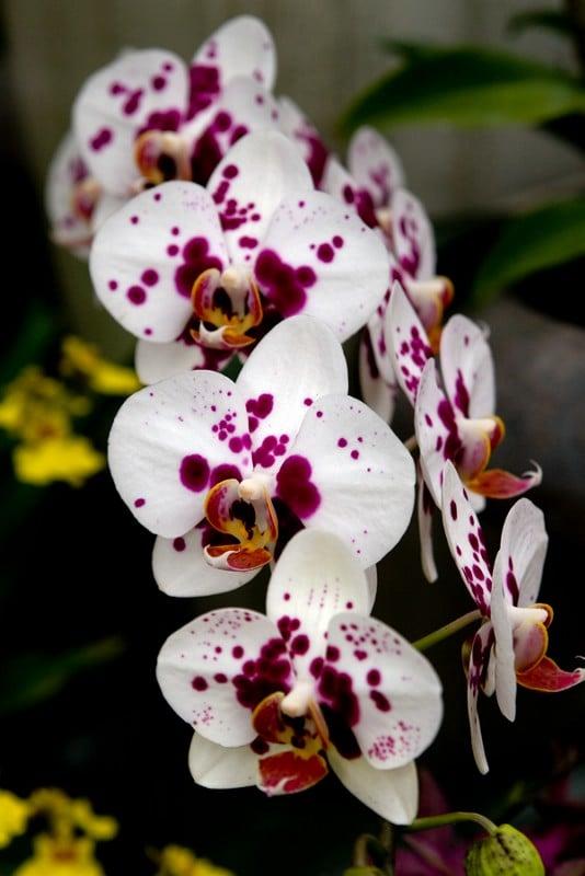 CSI Orchids: 11555 US Hwy 1, North Palm Beach, FL