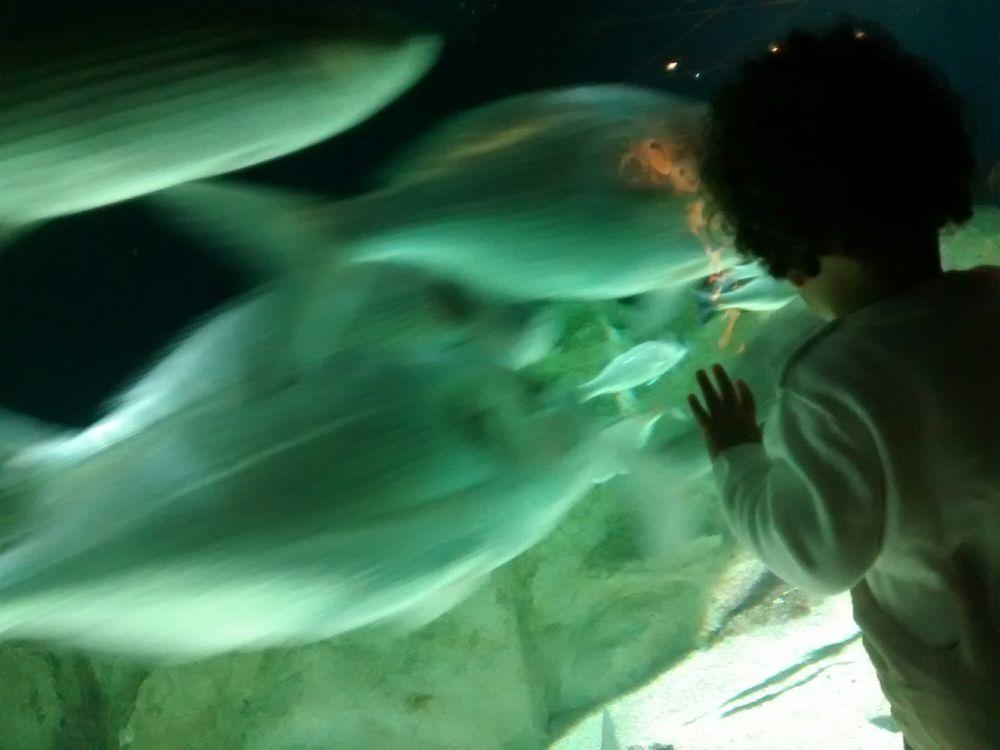 seaquarium 22 foto s 17 reviews aquaria ave du palais de la mer le grau du roi gard