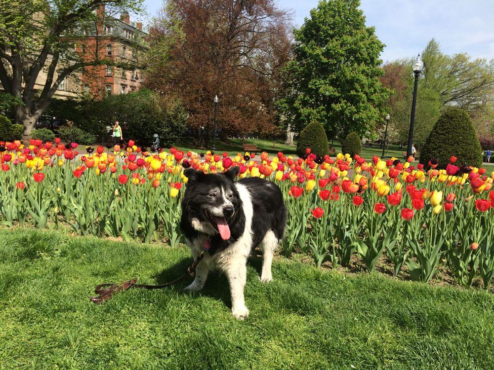 Boston Pet Sitters: 144 Commonwealth Ave, Boston, MA