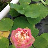 Photo Of Van Ness Water Gardens   Upland, CA, United States. My Stunning