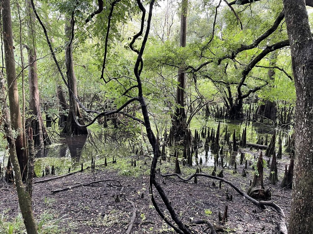 Fanning Springs State Park: 18020 NW Hwy 19, Fanning Springs, FL