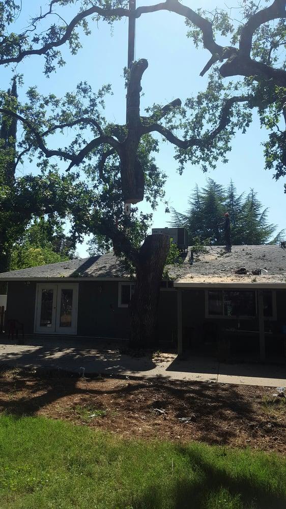 Sierra Vista Vegetation Removal & Tree Services: 21277 Old Alturas Rd, Redding, CA