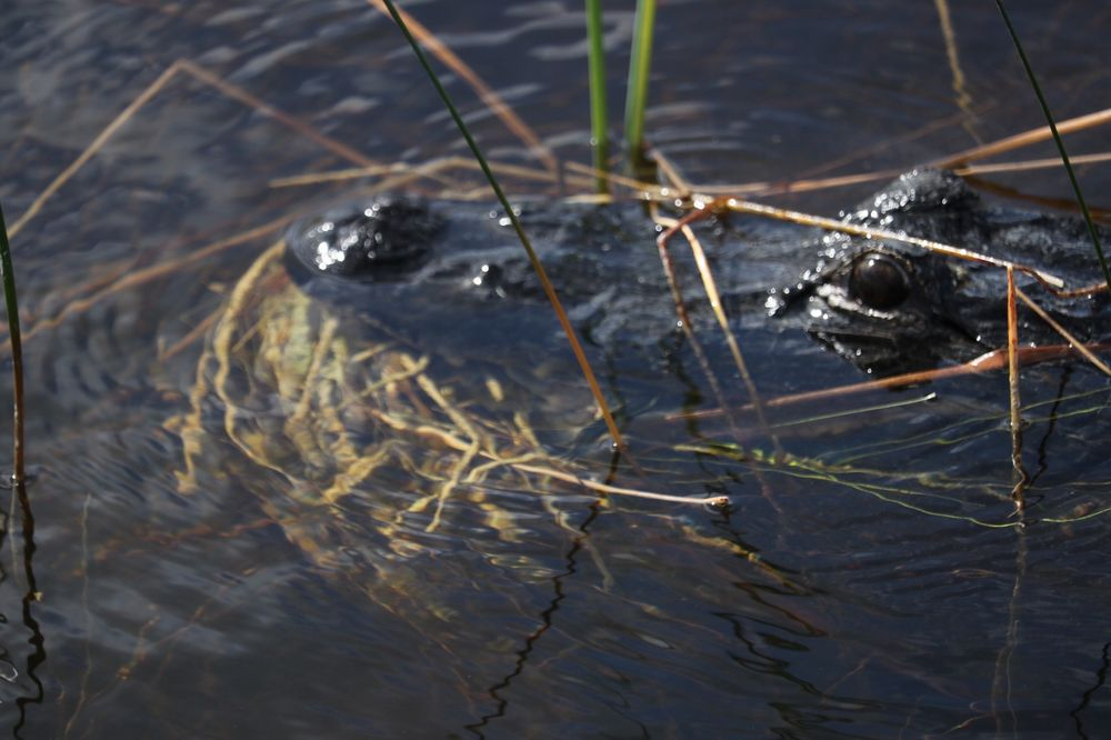Airboat Rides Fort Lauderdale: 5800 NE 2nd Ter, Fort Luaderdale, FL