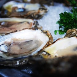 Photo Of The Oceanaire Seafood Room Baltimore Md United States Oysters