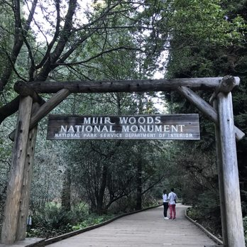 my trip to muir woods essay I think this adds about a mile where you walk along muir woods road to the fire road but the round trip would take a lunch in the woods muir woods now.