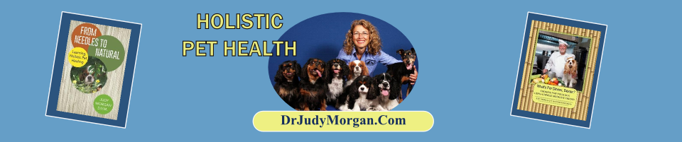Judy Morgan, DVM-Clayton Veterinary Associates: 820 N Delsea Dr, Clayton, NJ