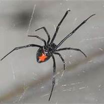 Armstrong Pest Control of Montana: 260 Moore Ln, Billings, MT