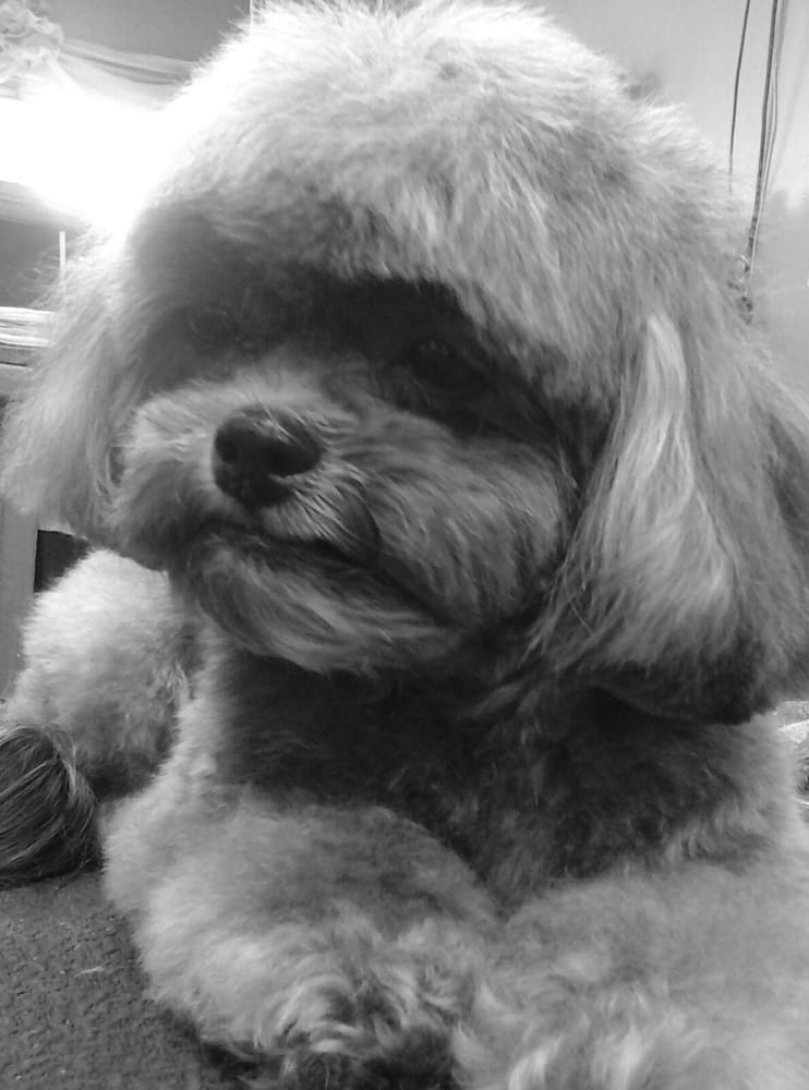 Bark A Tude Pet Salon: 300 Mooty Bridge Rd, Lagrange, GA