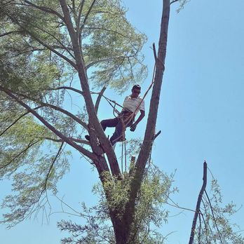 Photo Of Expert Tree Service Houston Tx United States Call For An