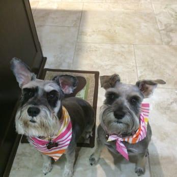 K9 Klub Dog Grooming - Pet Groomers - 25303 Fahrenthold Cir, San ...