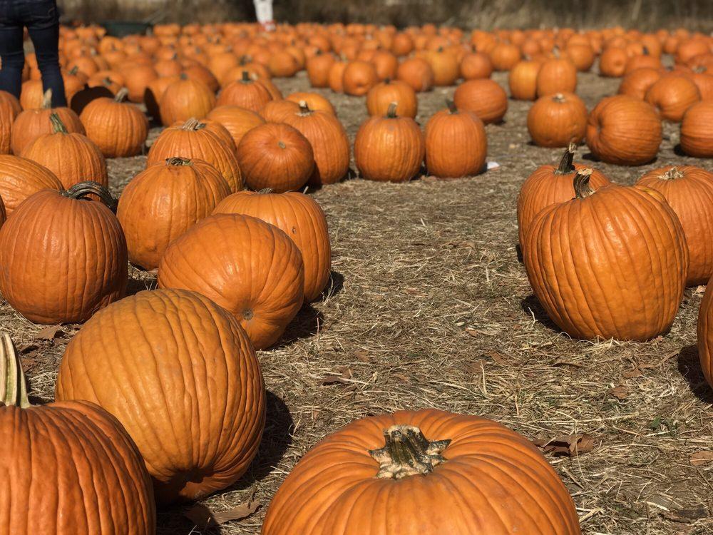 Joan's Farm & Pumpkin Patch