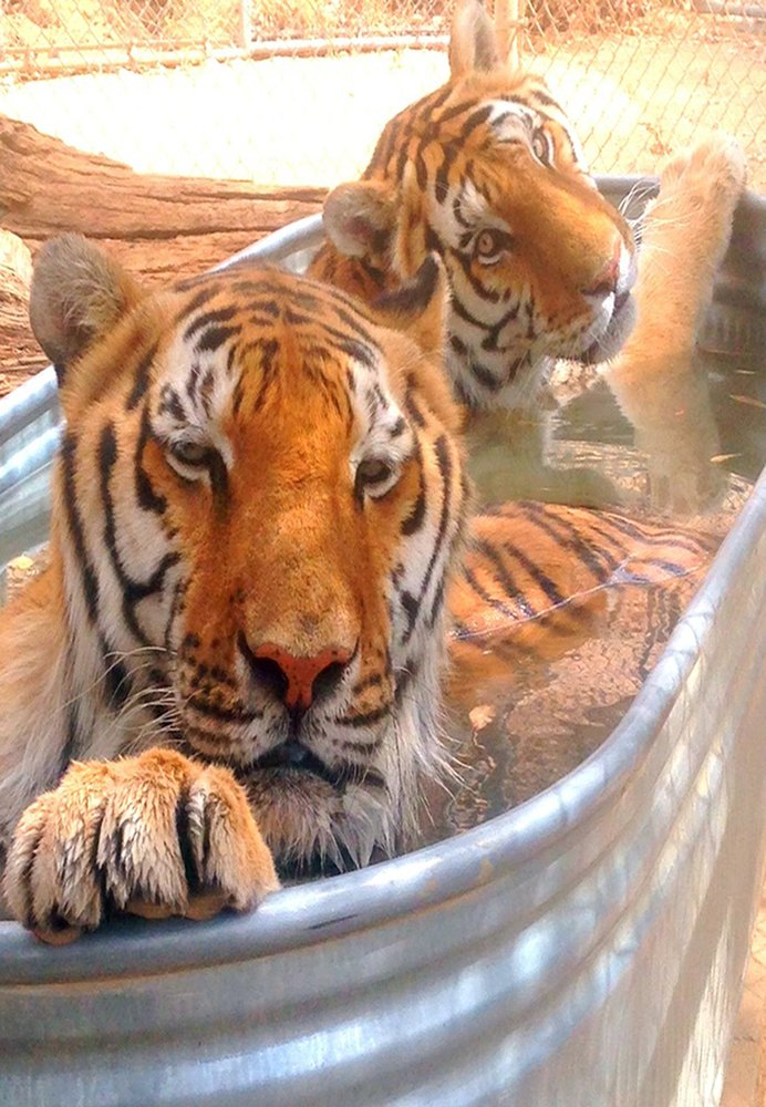 Wildlife waystation 12 photos 16 reviews community for 12651 little tujunga canyon lake view terrace ca 91342