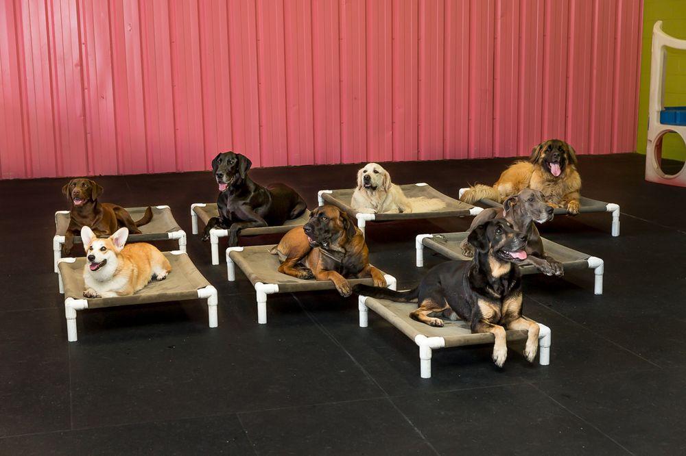 Peace Love Dogs - Houston: 9619 Yupondale Dr, Houston, TX