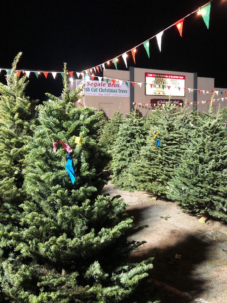 Segale Christmas Tree Lot: 400-420 E Lockeford St, Lodi, CA
