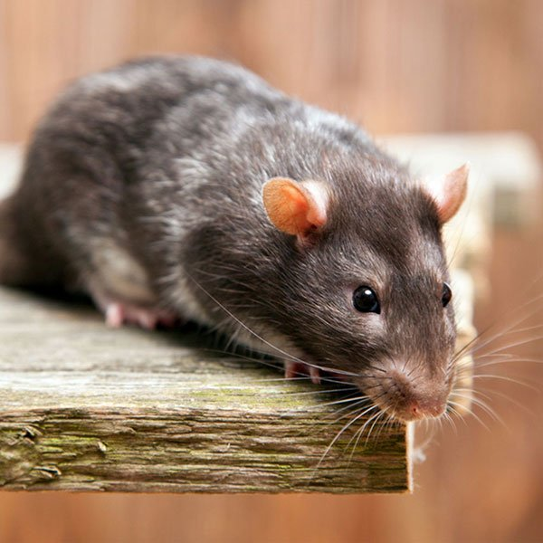 A&C Pest Management: 392 E Meadow Ave, East Meadow, NY