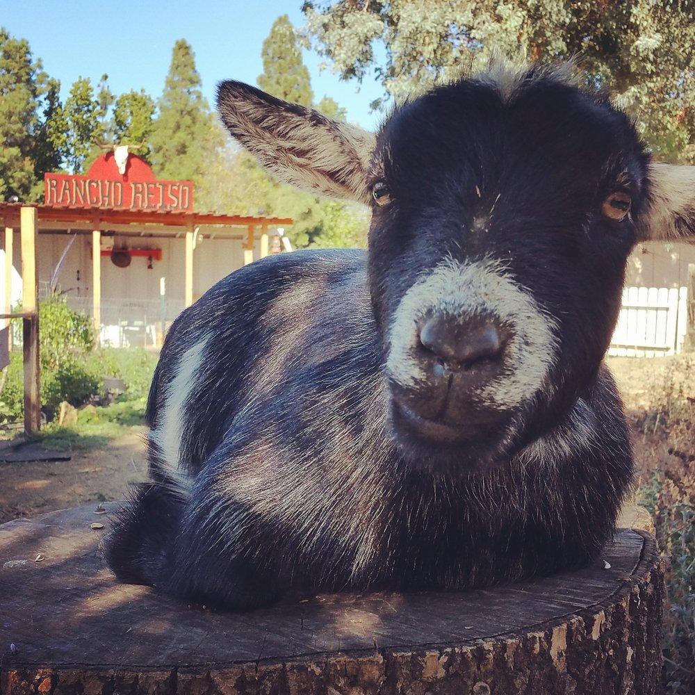 Rancho Reiso: 123 Donkey St, Agoura Hills, CA