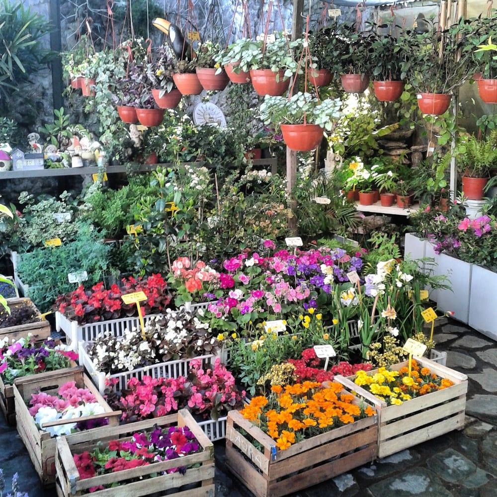 Vivero septiembre viveros y jardiner a neuquen 3405 3 for Viveros de plantas en lima