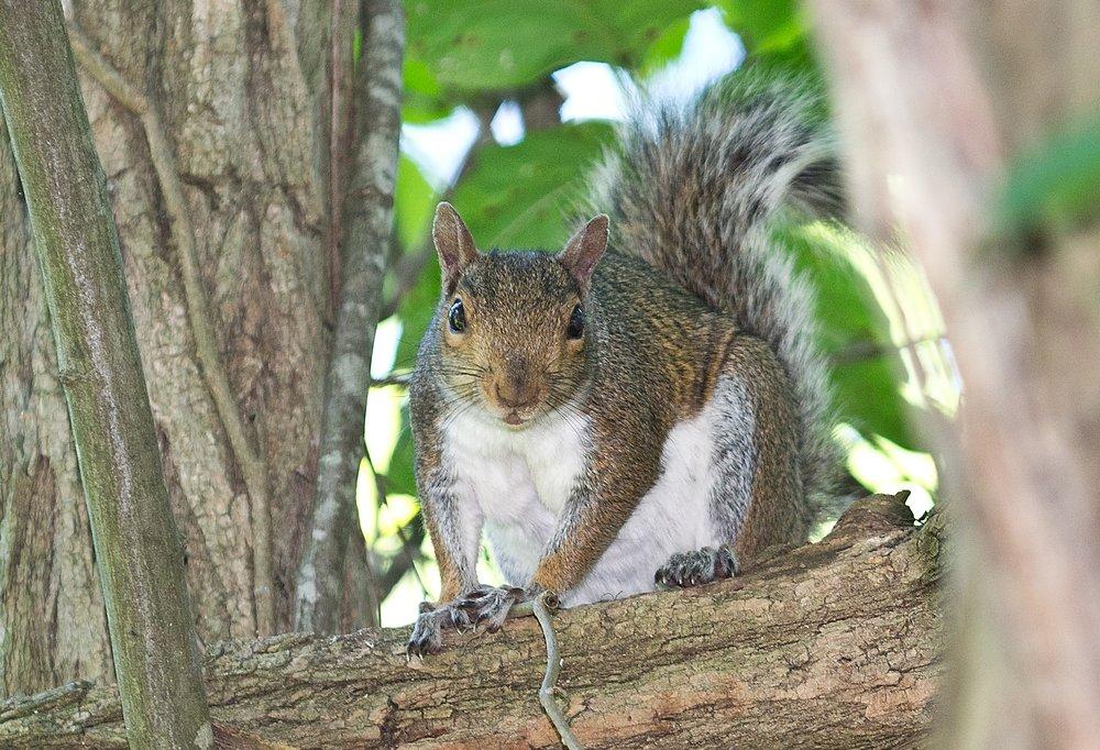 Bugaboo Pest Control: 13 Independence Ct, Lakewood Township, NJ