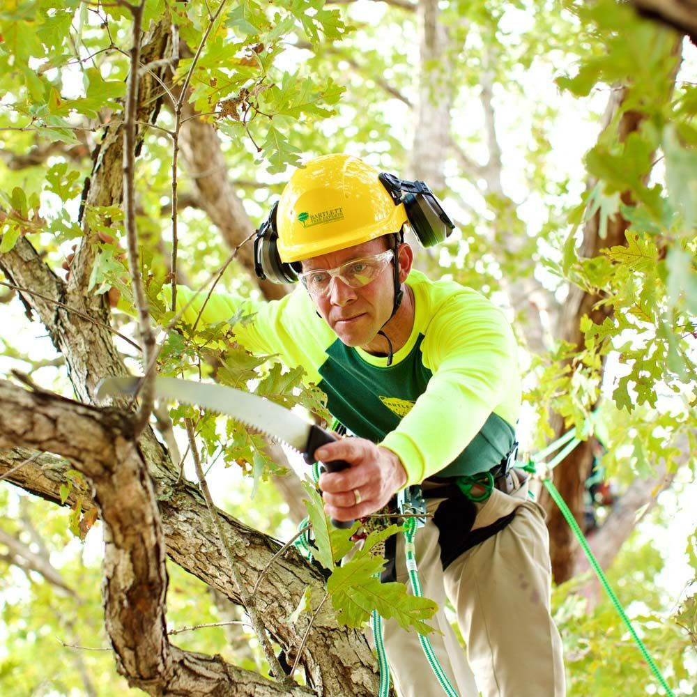 Bartlett Tree Experts: Augusta, GA