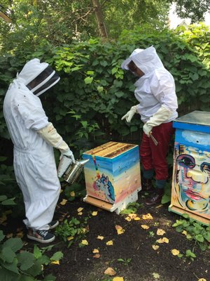 Photo Of Backyard Beekeepers   Minneapolis, MN, United States. Gathering  Honey