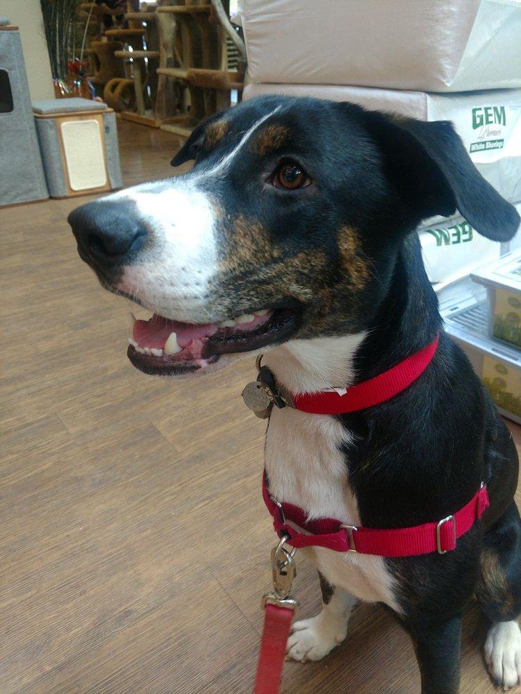 Dog Walking Services Denny