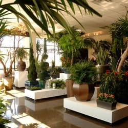 Photo Of Plant Solutions Scottsdale Az United States Showroom Floor