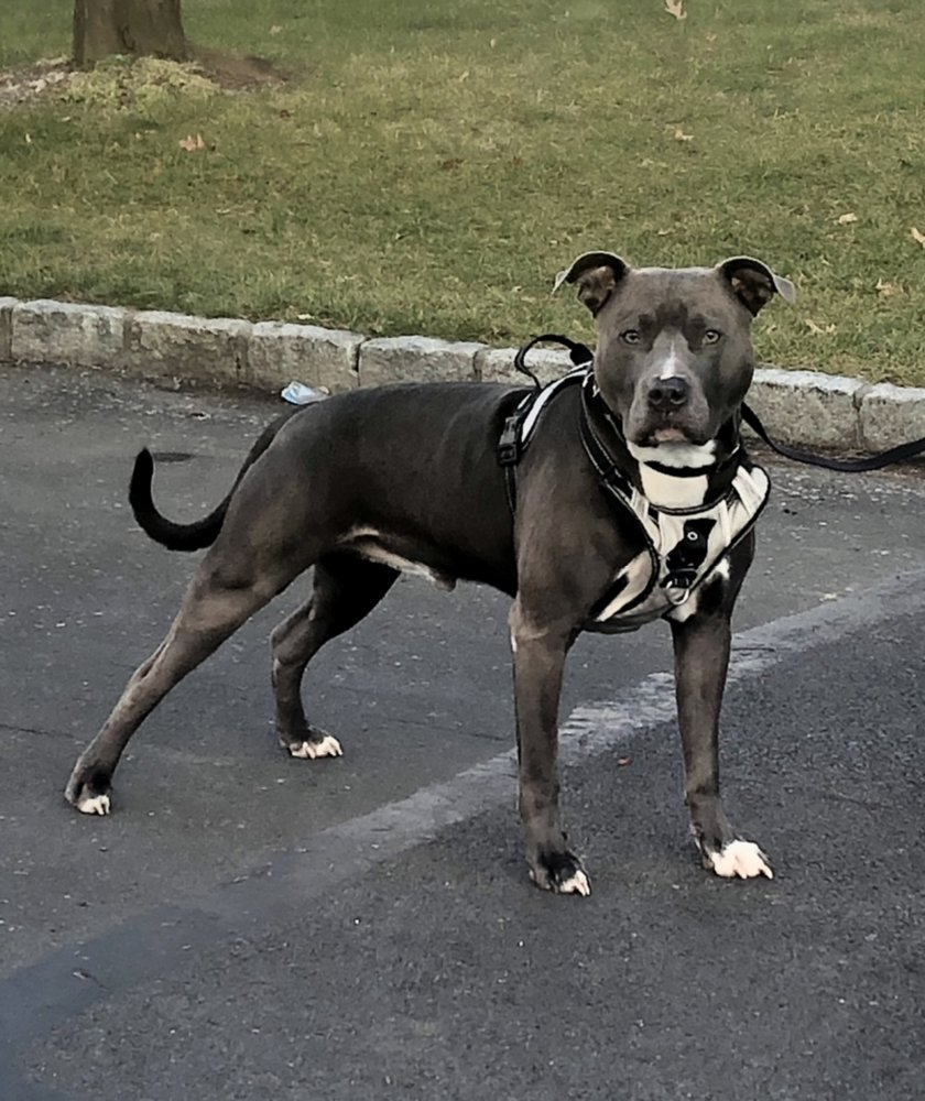 Bark Busters Home Dog Training Westchester: Valhalla, NY