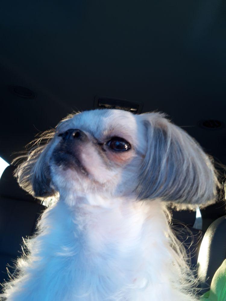 Jill's Professional Pet Grooming: 1090 Pioneer Dr, Lebanon, VA
