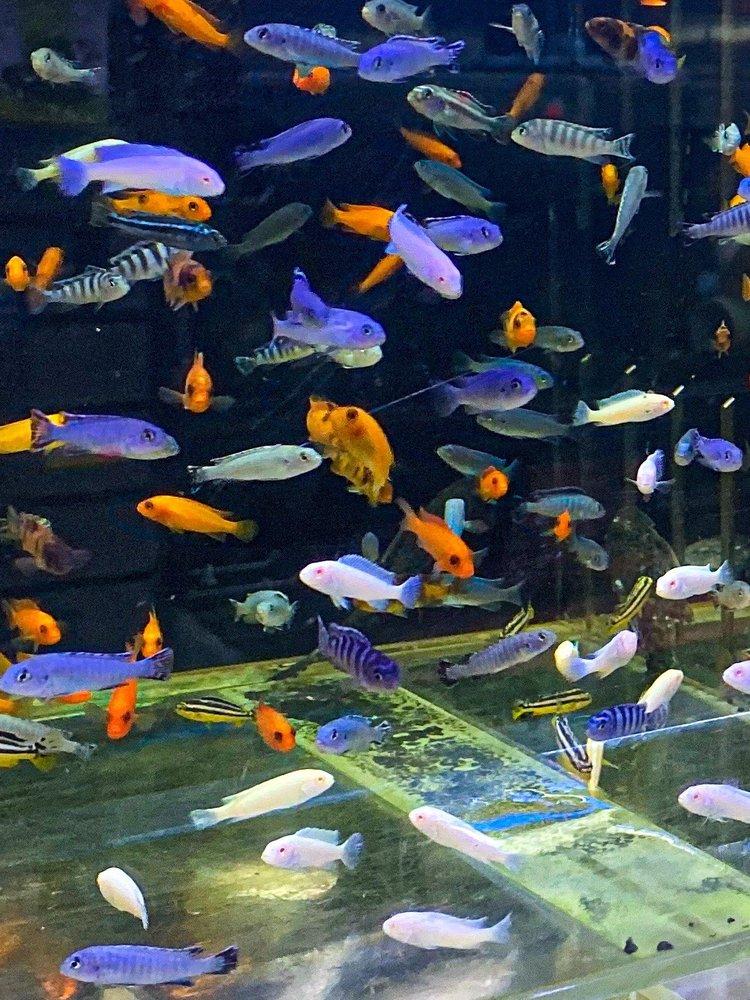 Coral Reef Aquariums: 8416-A N Armenia Ave, Tampa, FL