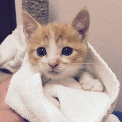 13th Street Cat Rescue - 58 Photos & 70 Reviews - Animal Shelters