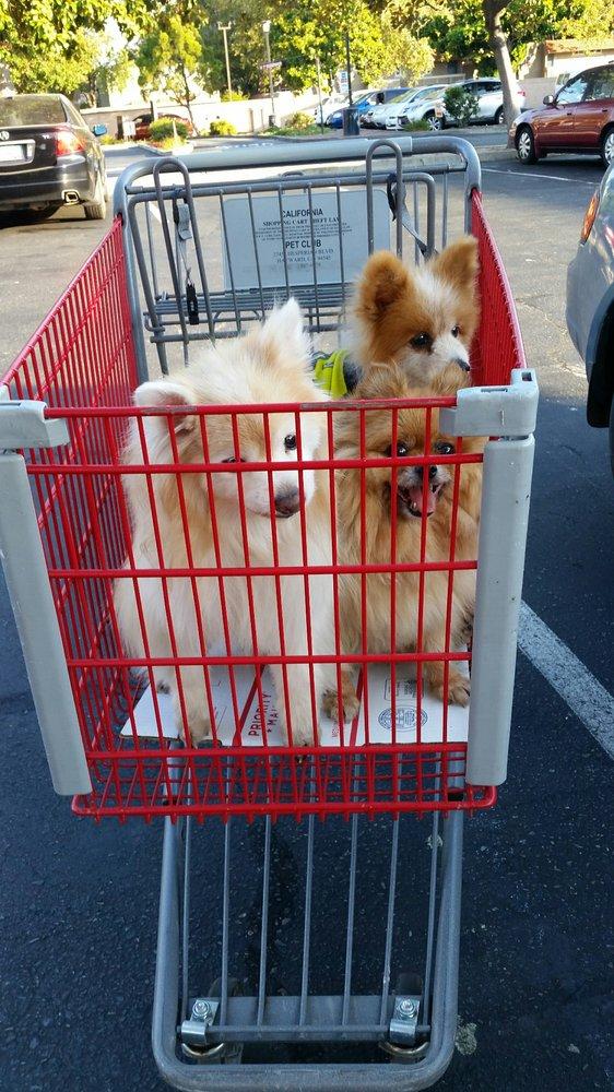 Pet Club: 27451 Hesperian Blvd, Hayward, CA