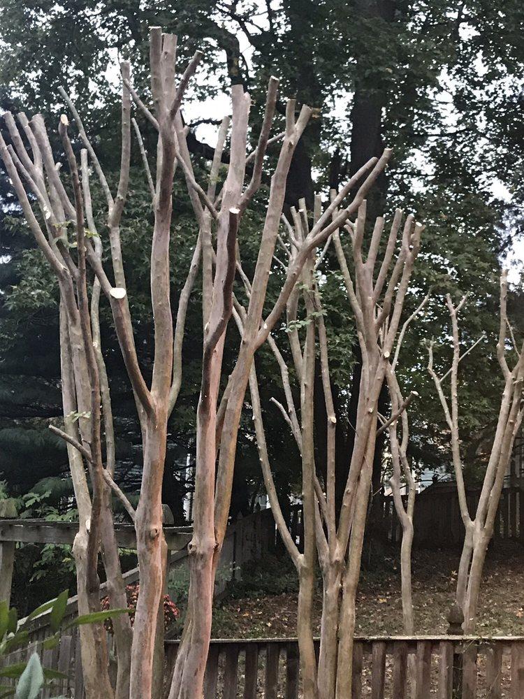 Life And Limb Tree Care: Lexington Park, MD