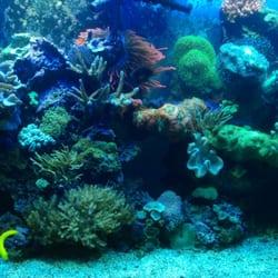 Upgrade Your Reef Aquariums 6070 Brook Hollow Dr Salt