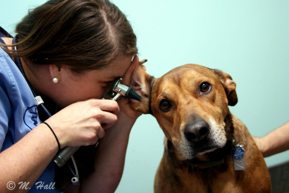 North Suffolk Animal Clinic
