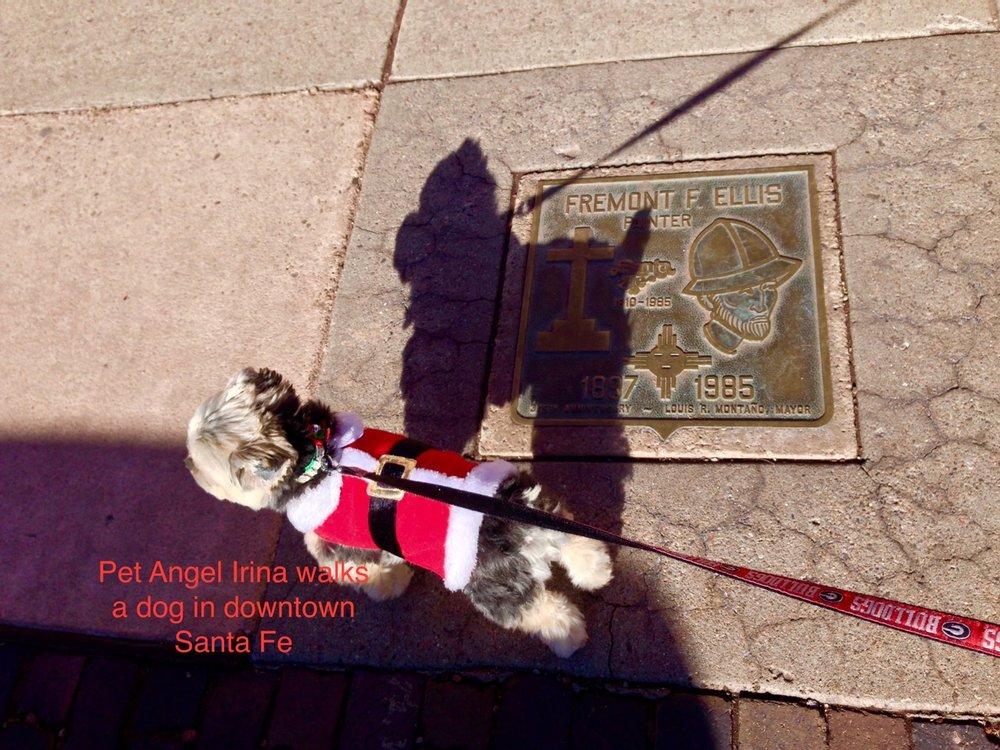 Pet Angel Santa Fe: Santa Fe, NM