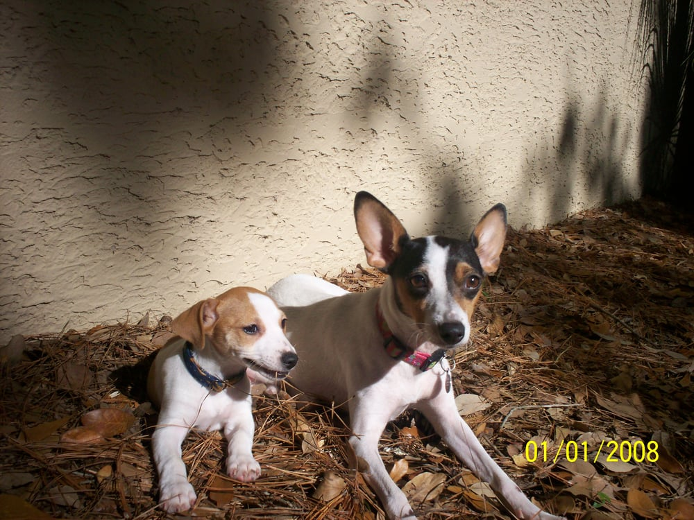 Lucy and leshia we adopted for my parents yelp for 4 paws pet salon